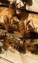 gezond met bijenproducten