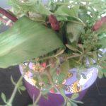 voorjaarskruiden