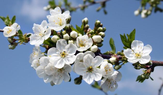 voorjaarswandeling 3
